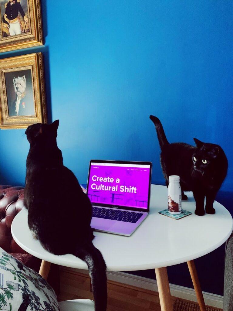 Laura Rothwell's cats